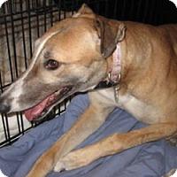 Adopt A Pet :: Annie - Canadensis, PA