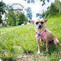 Adopt A Pet :: Gretchen - Shawnee Mission, KS
