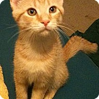 Adopt A Pet :: Alistair - Sterling Hgts, MI
