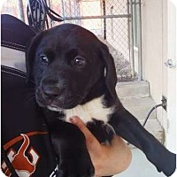 Adopt A Pet :: Raisin (Bran) - Cumming, GA