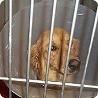 Adopt A Pet :: Chunk - Denver, CO