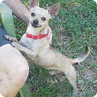 Adopt A Pet :: King - Ormond Beach, FL