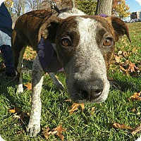 Hound (Unknown Type) Mix Dog for adoption in Detroit, Michigan - Homer-Pending!