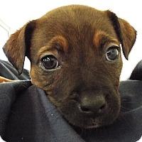 Adopt A Pet :: Maia - Grants Pass, OR