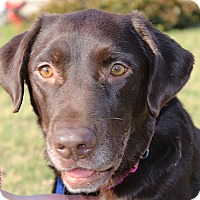 Adopt A Pet :: Heidi - in Maine - kennebunkport, ME