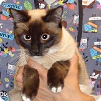 Adopt A Pet :: Monica - Wildomar, CA