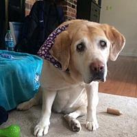 Adopt A Pet :: Sandy - Warrington, PA
