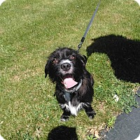 Adopt A Pet :: Rocky - Warsaw, IN