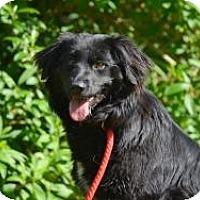 Adopt A Pet :: Jody - New Boston, NH