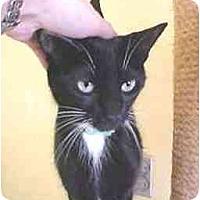 Adopt A Pet :: Bobbi Jo - Lunenburg, MA