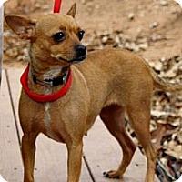 Adopt A Pet :: Chloe - maryville, TN