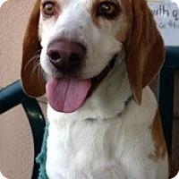 Adopt A Pet :: Fletcher - Canoga Park, CA