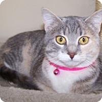 Adopt A Pet :: Abbey - Colorado Springs, CO