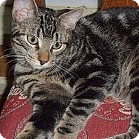 Adopt A Pet :: Hubert - Norwich, NY