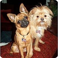 Adopt A Pet :: ZEPHYR & ZOE in central Wisc - Sun Prairie, WI