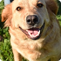 Adopt A Pet :: Abby - New Canaan, CT