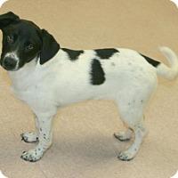 Adopt A Pet :: Jaks - Lufkin, TX