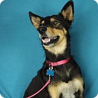 Adopt A Pet :: Rosie - Minneapolis, MN