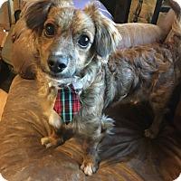 Adopt A Pet :: Buddy - Newtown, CT
