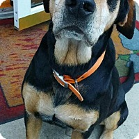 Hound (Unknown Type) Mix Dog for adoption in Irmo, South Carolina - Colonel