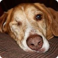 Adopt A Pet :: Faith - Madison, WI