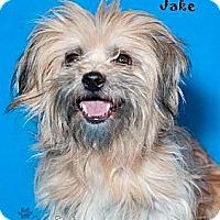 Adopt A Pet :: Beckett - Phoenix, AZ