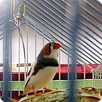 Adopt A Pet :: Freddie - Lenexa, KS