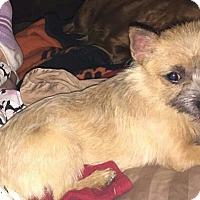 Adopt A Pet :: Harmony - Scottsdale, AZ