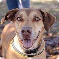 Adopt A Pet :: Baylee - Greenwood, SC