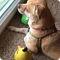 Adopt A Pet :: Chico - Beavercreek, OH