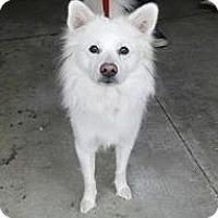 Adopt A Pet :: Charlie of Cincinnati, Ohio - Lindsey, OH