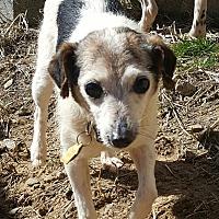 Adopt A Pet :: Dottie - Lexington, KY