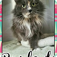 Adopt A Pet :: Bridget - Edwards AFB, CA