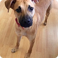 Adopt A Pet :: Zamaya in CT - Manchester, CT