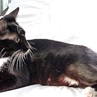 Adopt A Pet :: Happy - Aylett, VA
