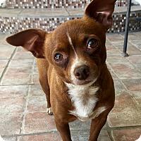 Adopt A Pet :: Tilda (ARSG) - Santa Ana, CA