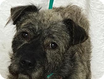 Terrier (Unknown Type, Medium) Mix Dog for adoption in Brooklyn, New York - Jay