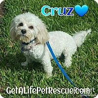 Adopt A Pet :: Cruz - Wellington, FL