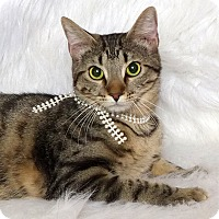 Adopt A Pet :: Lupé - Kerrville, TX