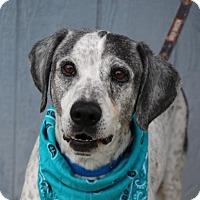 Adopt A Pet :: Navajo Joe - Yucaipa, CA