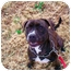 Photo 3 - American Pit Bull Terrier Mix Dog for adoption in Jersey City, New Jersey - Duchess