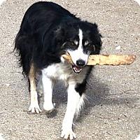 Adopt A Pet :: Jace - Monrovia, CA