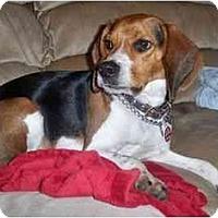 Adopt A Pet :: Julius Ceasar