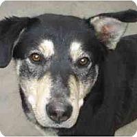 Adopt A Pet :: Caliou - Racine, WI