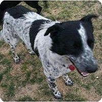 Adopt A Pet :: Buster - Alliance, NE