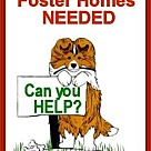 Adopt A Pet :: Foster Homes Needed