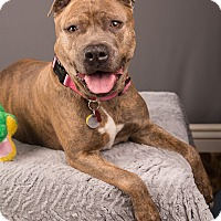 Adopt A Pet :: Rosie - Eugene, OR