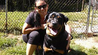 Rottweiler Dog for adoption in Cuddebackville, New York - Madison