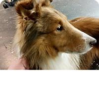 Adopt A Pet :: Prince Albert - COLUMBUS, OH