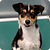 Adopt A Pet :: Ralphie - San Francisco, CA